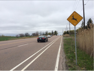 Steeles Ave. East bike lane near starting point at Pickering Town Line Rd.
